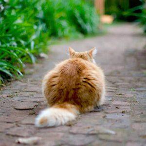 Neues Revier: Der Umzug mit Katzen