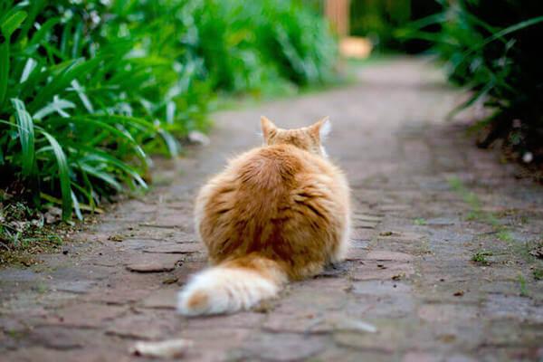 Katze sitzt vor dem Haus